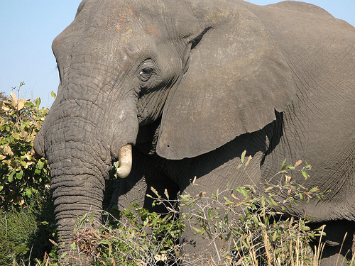 Discover Southern Africa: Botswana