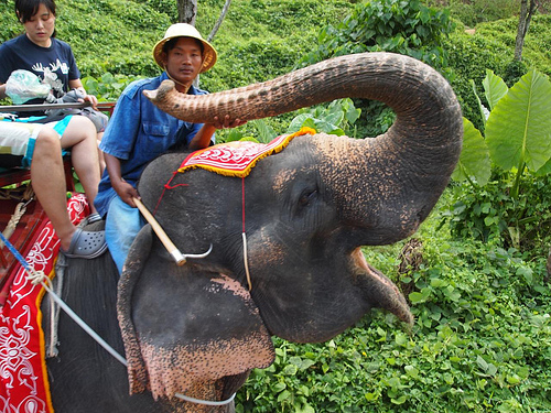 Safaris in Phuket Offer Amazing Experiences for All